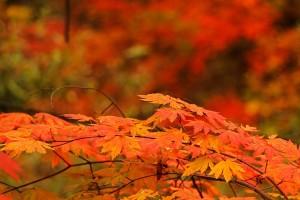Höst löv